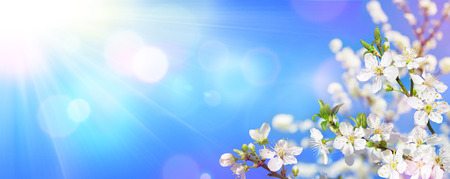 Foto de Spring Blooming - Sunlight On Almond Blooms - Imagen libre de derechos