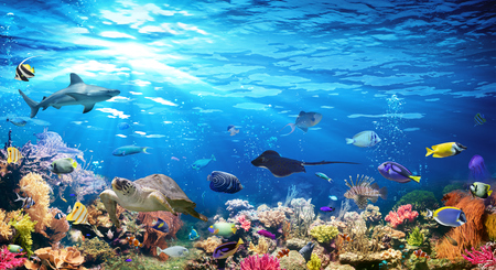 Photo for Underwater Scene With Coral Reef And Exotic Fishes - Royalty Free Image