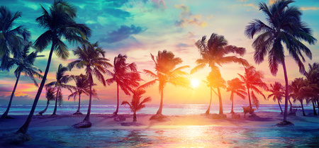 Foto de Palm Trees Silhouettes On Tropical Beach At Sunset - Modern Vintage Colors - Imagen libre de derechos