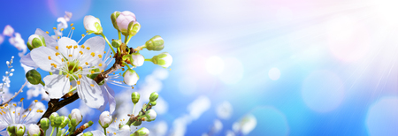 Foto per Blooming In Spring - Almond Blossoms In Sunny Sky - Immagine Royalty Free