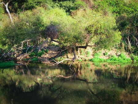 Inclined tree reflecting on the river