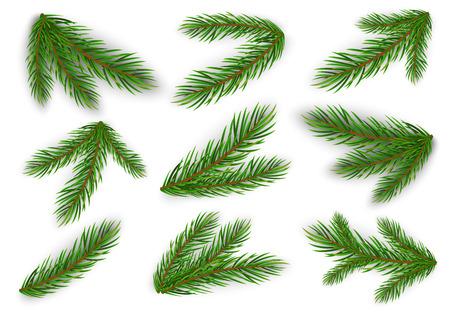 Illustration pour Set of fir branches. Christmas tree, pine. Vector Eps10 - image libre de droit