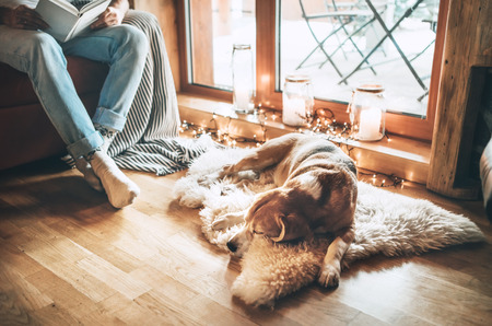 Photo pour Man reading book on the cozy couch near slipping his beagle dog on sheepskin in cozy home atmosphere. Peaceful moments of cozy home concept image. - image libre de droit