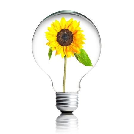 Photo pour sunflower growing inside the light bulb - image libre de droit