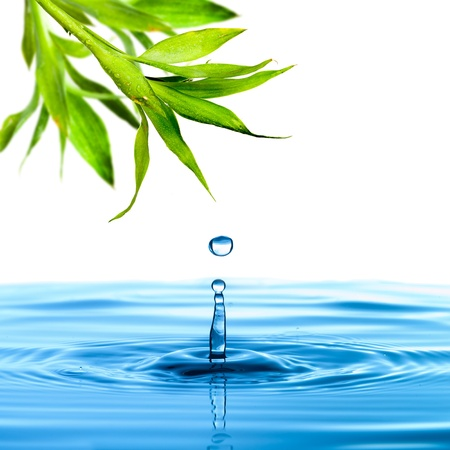 Photo for Fresh green bamboo leaf water drop - Royalty Free Image