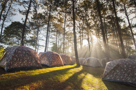 Camping tent with fog and trees at sunrise