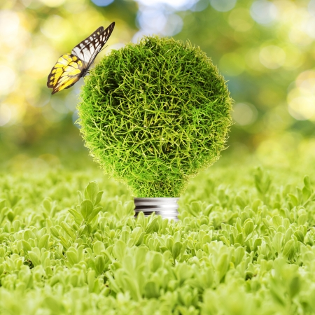 Grass Light bulb on green grass and butterfly  Concept of Eco technology