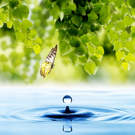 Photo for Butterfly with green leaf and water drop - Royalty Free Image