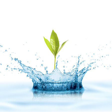 Green Leaf with Water Splashの写真素材