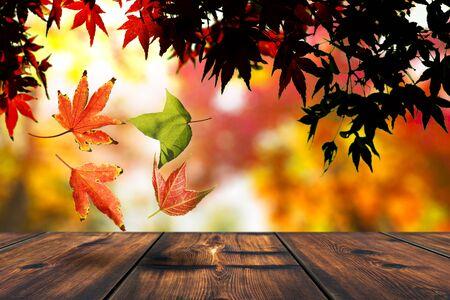 Photo pour Autumn Leaf Falling. Autumn Or Fall Season - image libre de droit