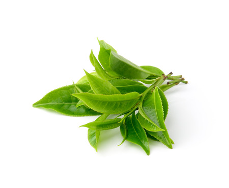 green tea leaf isolated on white backgroundの写真素材