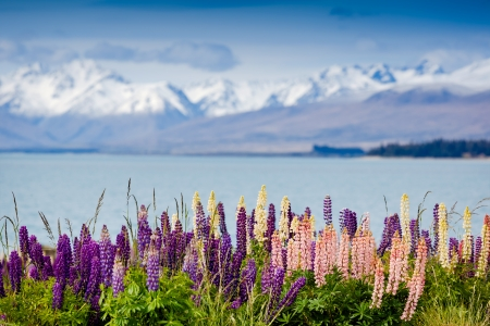 Majestic mountain lake with llupins blooming