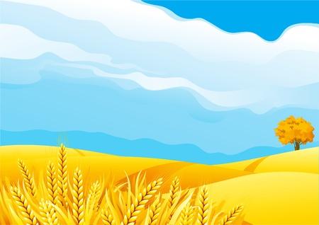 Illustration pour Grain fields. Fall landscape of yellow Grain fields with Wheat - image libre de droit