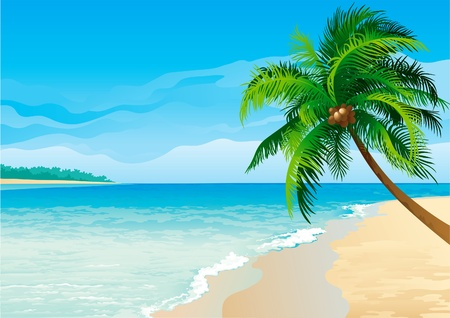 Coconut palm tree . Vector illustration  of coconut palm tree on tropical beach - Horizontal format.