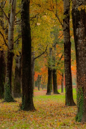 you plant with trees in autumn