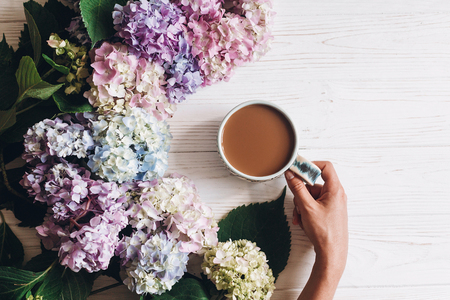 Hand Holding Coffee Cup At Beautiful Hydrangea Flowers On Rustic White Wood Flat Lay Good Morning Concept Colorful Pink Blue Green Hydrangea Hello Spring Happy Mothers Day Stock Images Page Everypixel