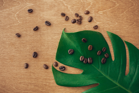 Photo for Roasted coffee beans on green monstera leaf on rustic wood in light, flat lay. Eco coffee beans concept, morning hot drink with energy and aroma. Copy space. Green  technology, save environment - Royalty Free Image