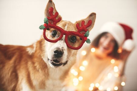 Photo for Cute golden dog in festive reindeer glasses with antlers looking with funny emotions on background of smiling girl in santa hat and christmas lights. Merry Christmas. Happy Holidays. - Royalty Free Image