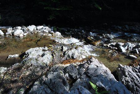 fern on water