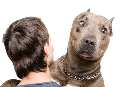 Portrait of a pit bull on the shoulder of a young man isolated on white backgroundの写真素材