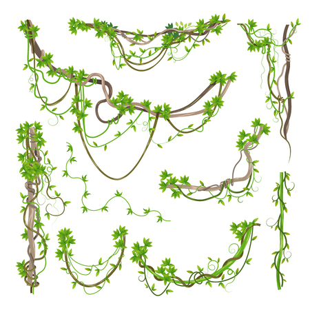 Illustration for Liana or jungle plant greenery winding branches - Royalty Free Image