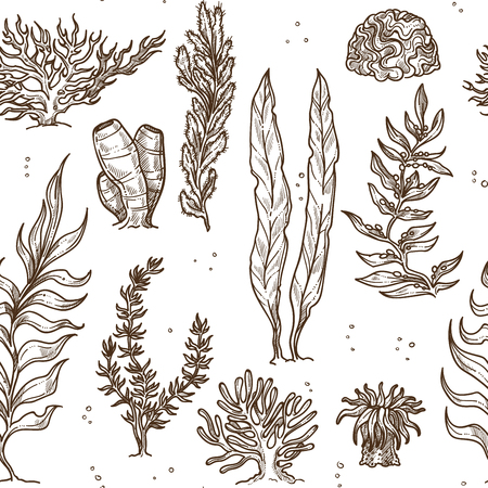 Illustration pour Underwater plants seaweed and corals and sponges monochrome seamless pattern leaves and bushes sea and ocean greenery water vegetation wild bottom species endless texture stems and sprouts sketches. - image libre de droit