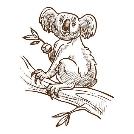 Illustration pour Australian symbol, koala bear on tree branch eating eucalyptus - image libre de droit