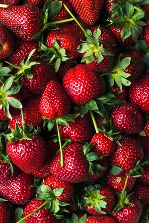 Photo for Freshly harvested ripe strawberries, top view. Wallpaper, texture and background - Royalty Free Image