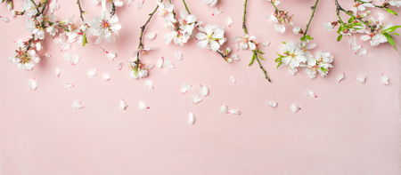 Photo for Spring floral background, texture, wallpaper. Flat-lay of white almond blossom flowers and petals over pink background, top view, copy space, wide composition. Womens day holiday greeting card - Royalty Free Image