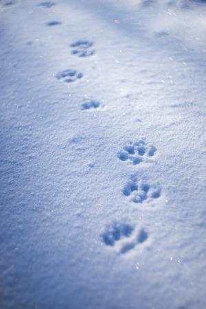 Photo pour Paw prints in snow. - image libre de droit