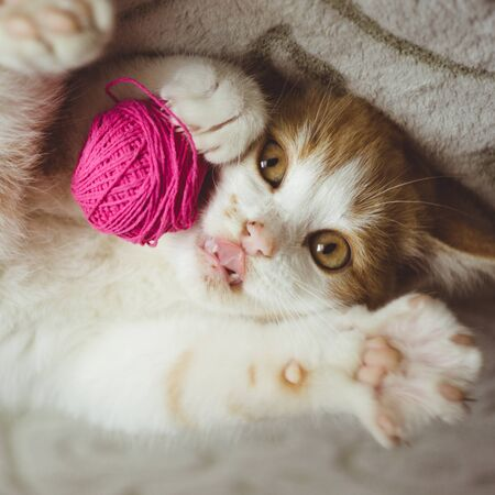 Photo pour Ginger kitten plays with a ball of thread, funny cat show tongue - image libre de droit