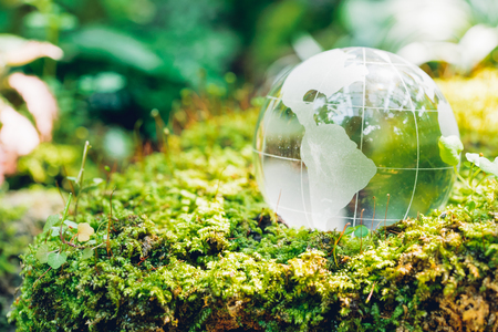 Globe glass in grass forest on nature background, Environment Day Concept