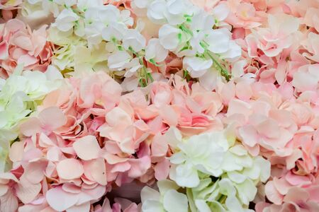 Photo for wall of large white and pink flowers-peonies - Royalty Free Image