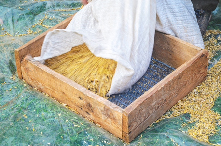 Pour the grain from a white sack into a sieve. Step of sieving grain manually