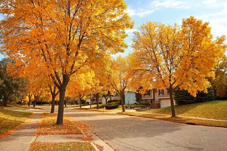 Foto per residential street in Fall with Golden colors and falling leaves - Immagine Royalty Free