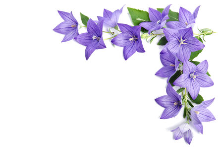 Photo pour corner made of Bellflowers isolated over white background - image libre de droit