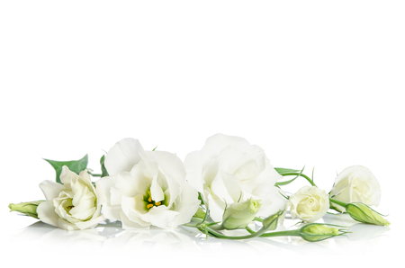 Foto de Beautiful white eustoma flowers isolated on white background - Imagen libre de derechos