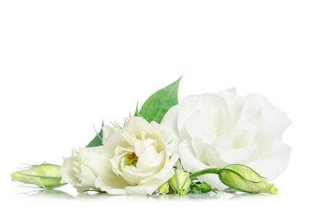 Photo for Beautiful eustoma flowers isolated on white background and free space for text at the top - Royalty Free Image