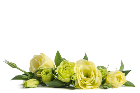 Photo for bouquet  of  green roses lying on white background - Royalty Free Image