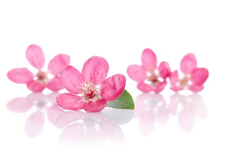 Photo pour four beautiful pink flowers isolated on white background - image libre de droit