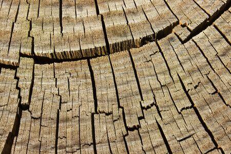 Foto de cracked pine wood - Imagen libre de derechos