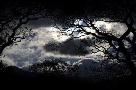 Scenic view of silhouetted trees in wood and night with moonlight and stormy skies.