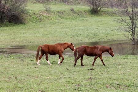 Horses Walking In The Field