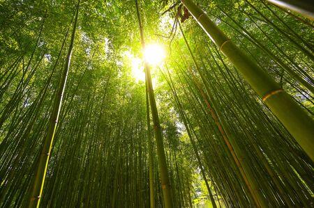 Photo pour Bamboo plantation, Green bamboo fence texture background, bamboo texture - image libre de droit