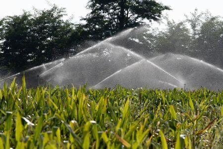 Foto für Irrigation system watering young green corn field in the agricultural garden by water springer - Lizenzfreies Bild