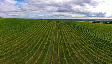 Photo pour Aerial view, Sunset landscape, Bordeaux wineyard, Langoiran, Gironde, France - image libre de droit