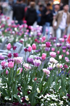 The center of Munich is adorned with beautiful flowers. - The center of Munich is decorated with beautiful flowers.