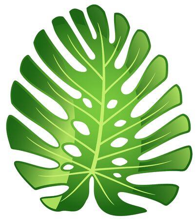 Leaf tropical plant - Monstera. Vector illustration.