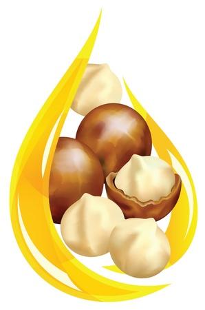 Illustration pour Macadamia oil. Stylized drop. Vector illustration on a white background. - image libre de droit