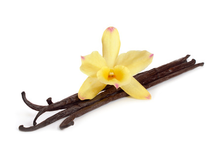 Photo for Vanilla pods with one yellow orchid. Isolated on white background. - Royalty Free Image